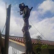 Ahli Tebang Pohon Kepras Perantingan Daun Potong Pohon Berbagai Jenis (29746927) di Kota Surabaya