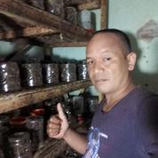 KROTO KUNINGAN JAWA BARAT (29764195) di Kab. Sumedang