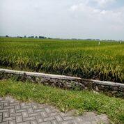 Tanah Sawah Produktif Sidoarjo Tanggulangin (29766608) di Kab. Pasuruan