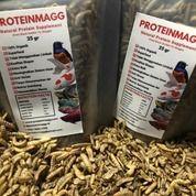 Vitamin Ikan Cupang - Suplemen Protein Alami Asli Dari Maggot BSF (29790977) di Kota Pontianak