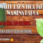 Salep Daun Bungkus Papua Krim Oles Tinggal Pakai (29828460) di Kota Surabaya