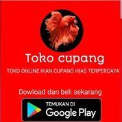 Toko Cupang Apk (29912193) di Kota Gorontalo