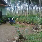 Tanah Pekarangan Samping Rumah Warga (29913627) di Kab. Pekalongan