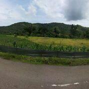 Tanah Di Lunyuk Lenang Guar Sumbawa (29934280) di Kab. Sumbawa