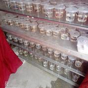 Ikan Cupang Halfmon Grosiran (30042449) di Kota Banjarbaru