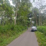Tanah Kebun Murah Pinggir Jalan Musuk Boyolali (30304188) di Kab. Boyolali