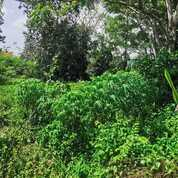 Tanah Keras Di Kawasan Kuarao Pagang, Kec. Nanggalo, Kota Padang (30314772) di Kota Padang