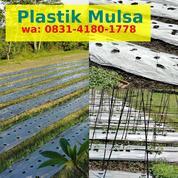 Cara Melubangi Plastik Mulsa (30336856) di Kab. Nias Selatan
