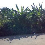 Tanah Di Cilangkap Cipayung Jakarta Timur (3034785) di Kota Jakarta Timur