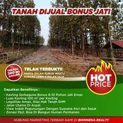 Tanah Murah Bonus Pohon Jati Bogor Timur (30382127) di Kota Bogor