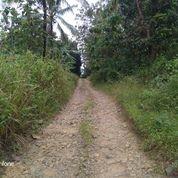 Tanah Murah 1 Ha Albasiah Di Cibitung Pandeglang (30384050) di Kota Serang