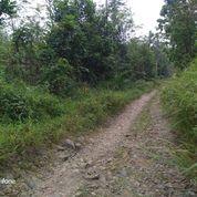 Tanah Kebun Murah 1 Ha Albasiah Di Cibitung Pandeglang (30385176) di Kota Serang