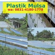 Promo Mulsa Plastik Terdekat (30392979) di Kab. Bireuen