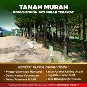 Tanah Murah Bonus Pohon Jati (30420328) di Kota Bogor