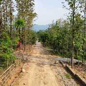 Kavling Jati Murah Nempel Jalan Kab Bogor (30422996) di Kota Bogor