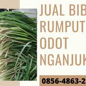 0856-4863-2193 Rumput Pakan Kambing Kering Lengkong Nganjuk (30824622) di Kab. Blitar