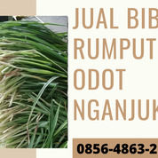 0856-4863-2193 Rumput Pakan Kambing Komplit Lengkong Nganjuk (30824750) di Kota Blitar