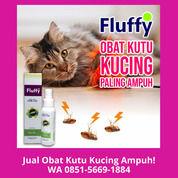 TERLARIS!! WA 0851-5669-1884, Obat Kutu Kucing Paling Ampuh Di Jakarta (30866367) di Kota Depok