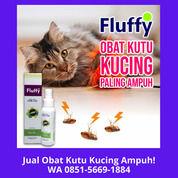 TERBAIK!! WA 0851-5669-1884, Agen Obat Kutu Kucing Kitten Di Jakarta (30866379) di Kota Depok
