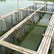 Waring Ikan Untuk Keramba Harga Termurah (30895111) di Kota Banjarbaru