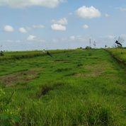 Tanah 25,75 Are, Jl. Ngurah Beng Cepaka Kediri Tabanan (30898932) di Kab. Tabanan