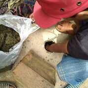 SEDOT WC CIMONE/KARAWACI TANGERANG (30909741) di Kota Tangerang
