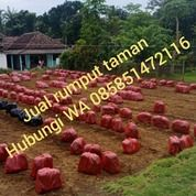 Rumput Golf Purbalingga,Rumput Taman Purbalingga Harga Murah (30959866) di Kab. Purbalingga