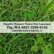 Rumput Embun, Tlp. 0857 3259 0133, ANDIKA GARDEN (30968799) di Kab. Malang