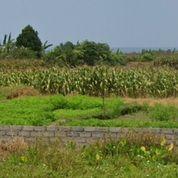 Tanah LOSS PANTAI 2,08 Hektar, Jl. Tibubiyu Pantai Pasut Kerambitan (30977604) di Kab. Tabanan