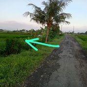 Tanah 15 Are, Jl. BR. Sangging Pantai Kelating Kerambitan Tabanan (31044966) di Kab. Tabanan