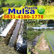 Menanam Cabe Tanpa Plastik Mulsa (31049103) di Kab. Bangka Tengah
