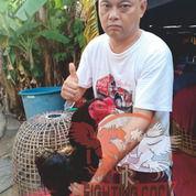 Ayam Bangkok Jogjakarta RJ Farm Indonesia (31102093) di Kota Bukittinggi