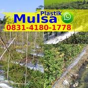 Harga Mulsa Plastik Pertanian (31119719) di Kab. Bintan