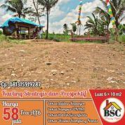Tanah Dekat Jalibar Kepanjen Malang (31122929) di Kab. Malang