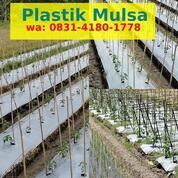 Plastik Mulsa Jempol (31154283) di Kab. Tabalong