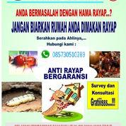 JASA ANTI RAYAP BERGARANSI DI SURABAYA, SIDOARJO, GRESIK,MOJOKERTO, JOMBANG, NGANJUK, KEDIRI (31171184) di Kota Surabaya