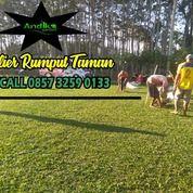 Rumput Taman Zoysia, WA +62 857 3259 0133, - ANDIKA GARDEN (31182228) di Kab. Malang