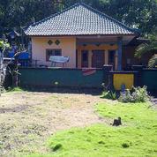 Tanah Rumah Gudang Toko Di Pinggir Jalan Raya Utama Denpasar Gilimanuk Di Pekutatan (3413021) di Kab. Jembrana