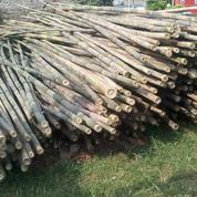 Bambu Umbul-Umbul, Spanduk, Banner, Tiang Bendera Murah Se JABODETABEK (3728276) di Kota Tangerang Selatan