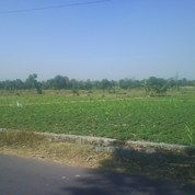 Tanah Sawah 200ha Di Kebonsari Sukorejo (1,5km Dari Jln Lintas Kabupaten Pasuruan) (3943901) di Kab. Pasuruan