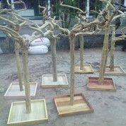 KAYU KOPI ALAM (Alam Dan Bersih) (4030397) di Kab. Malang