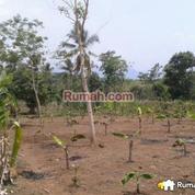 Tanah Cocok Untuk Resort Dekat Pantai Pelabuhan Ratu (4162931) di Kab. Sukabumi