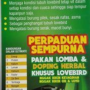 Perpaduan Sempurna Ultimate Herbal + Ultimate Pakan Lovebird Competition (4613705) di Kota Medan