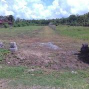Tanah Manis 700 Meter Ke Pantai, Pelabuhan Dan Pabrik Di Bali. (4841401) di Kab. Jembrana