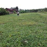 Tanah kavling di Bali cuma 1,5 are( 150m2) hot deal (4841581) di Kab. Jembrana