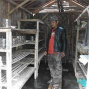 Ternak Kroto Media Stoples (4869907) di Kab. Indramayu