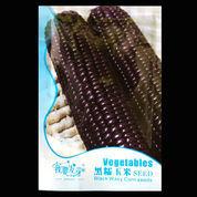 Black Waxy Corn (6570291) di Kota Tangerang