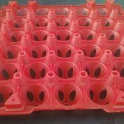 Rak Telur Plastik Komersial Isi 30 Butir (6631347) di Kota Surabaya