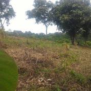 Peminat Perkebunan Dan Hewan Peliharaan (7651833) di Kab. Bogor