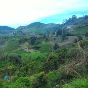 Tanah View Pergunungan Dan Kebun Teh Luas.9621 M2 (7736375) di Kab. Solok
